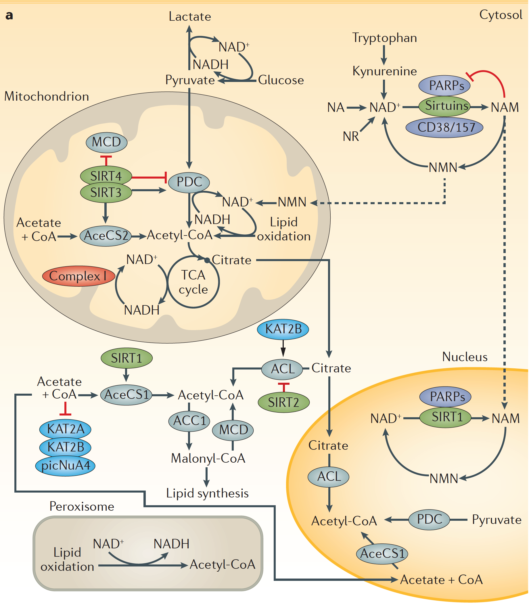 Endocrinology Review Nature